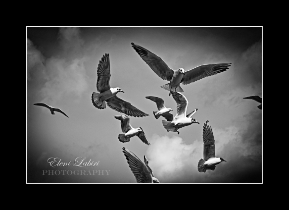 Freedom photography black and white